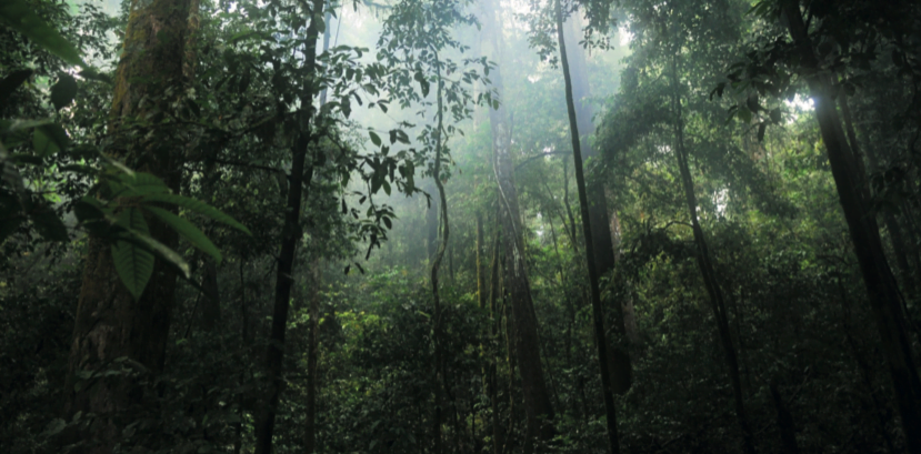 2018-03-08-kayu-intl-photo-img-sustainable-forest-management-full.png